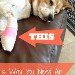 this is why you need an emergency fund text pointing to dog laying on a couch with injured and wrapped foot