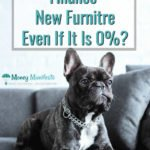 should you finance your new furniture even if it's 0 percent above black dog sitting on gray couch